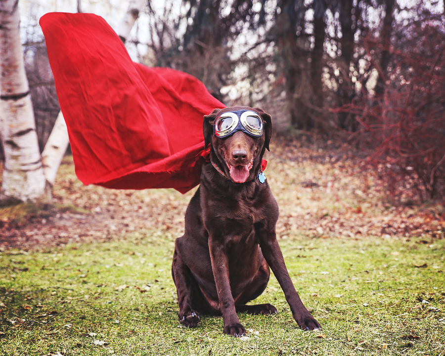 Super Dog With The Right Dog training Treats