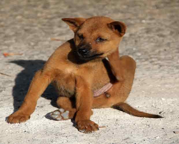 Dog Health Care for Fleas & Ticks