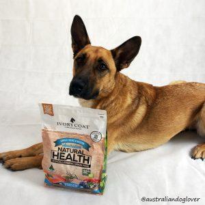 Dog Food Brands