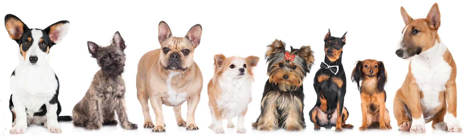 Premium Dog Food Online
